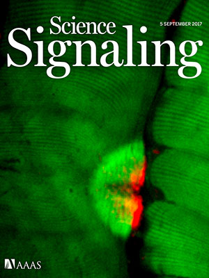 Science Signaling cover image 05Sept17