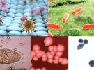 Parasite collage