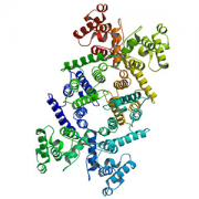 dystrophin protein