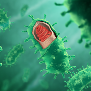 rabies virus illustration