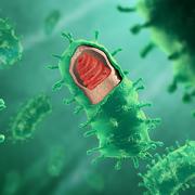 rabies virus illustration