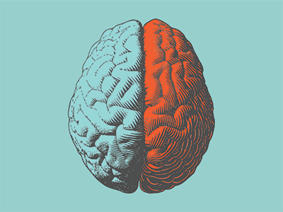 Illustration of brain hemispheres