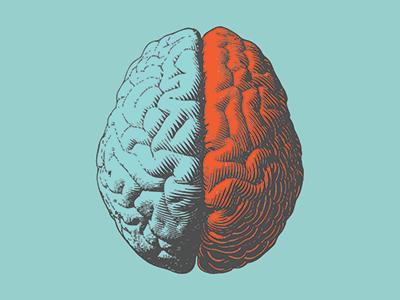 Illustration of brain hemispheres