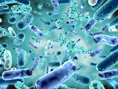 Illustration of Bifidobacterium