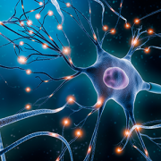Neuronal network with electrical activity