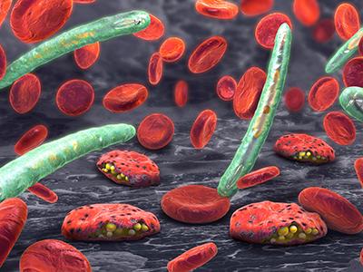 3d illustration of blood cells, plasmodium causing malaria disease